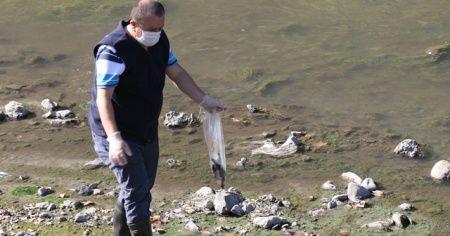 Üzülmez Deresi'nde yüzlerce ölü balık bulundu