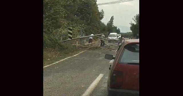 Bursa'da rüzgar ağaçları devirdi, yol trafiğe kapandı