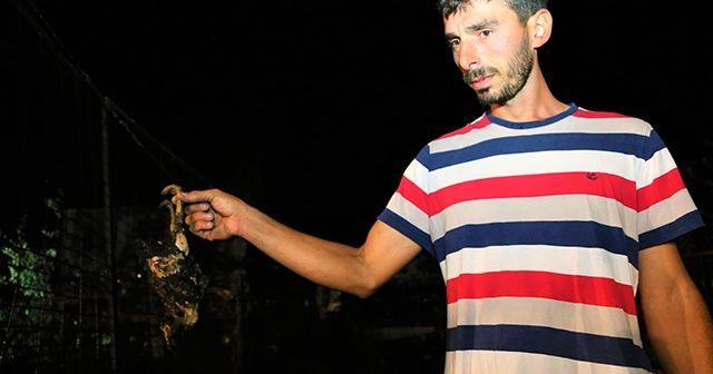 Çiftlikteki kümesler alev aldı, 250'den fazla hayvan telef oldu