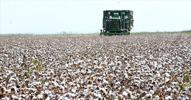 Çukurova çiftçisi alternatif ürünlere yöneldi pamukta ekim alanı daraldı