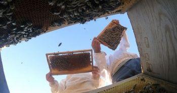 Türkiye'de bal üretimi geçen yıla göre yüzde 25 azaldı