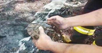 Yangın ortasında kalan kaplumbağayı itfaiyeciler kurtardı