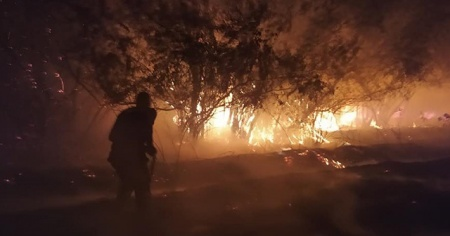 Bingöl'de yangın, bazı ağaçlar zarar gördü