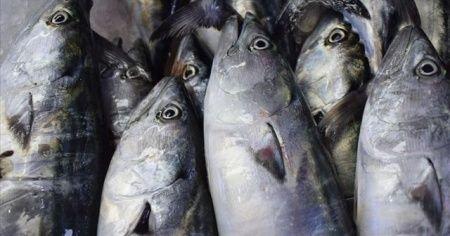 Edirne balık pazarında palamut bolluğu!