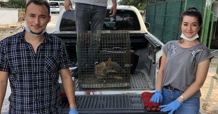 Halı yıkama makinesine sıkışan tilki kurtarıldı