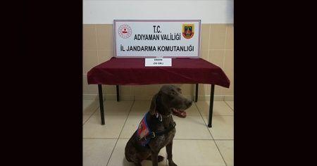 Jandarma uyuşturucu satıcılarına göz açtırmıyor