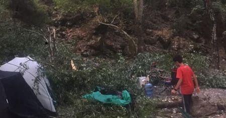 Kampçıların üzerine ağaç devrildi