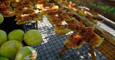 Mersin'de beyaz incir üreticisinin yüzünü güldürüyor