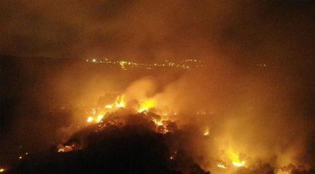 Pendik'te korkutan orman yangını