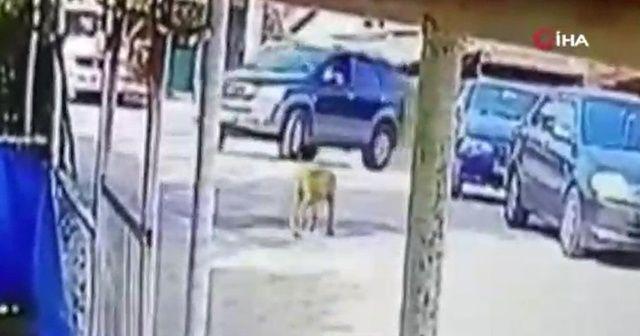 Göz göre göre aracı ile köpeği ezdi