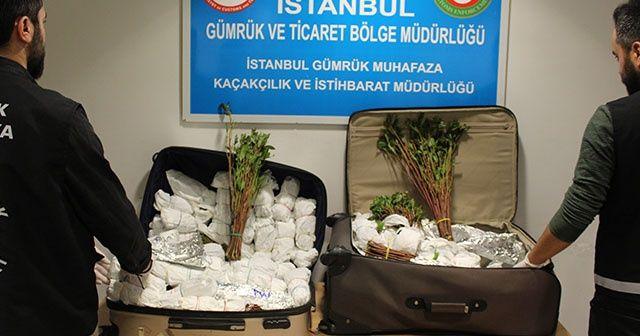 İstanbul Havalimanı'nda 208 kilogram Khat cinsi uyuşturucu ele geçirildi