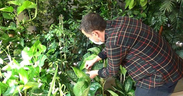 Sonbahar aylarında salon bitkilerinin bakımına dikkat