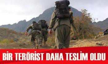 1 örgüt mensubu daha Şırnak'ta güvenlik güçlerine teslim oldu