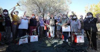 Bakan Pakdemirli kadın çiftçilerle zeytin hasadına katıldı