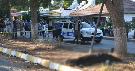 Ağaçtan kozalak çırparken elektrik akımına kapılan işçi öldü