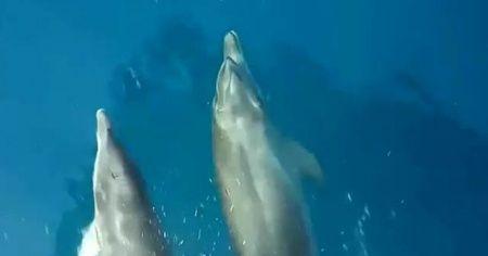 Antalya'da yunus balıklarının tekneye eşlik ettiği anlar gülümsetti