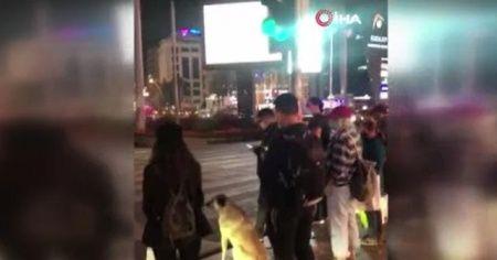 Köpek yolun karşısına geçmek için yeşil ışığı bekledi