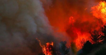 Ukrayna'da orman yangını