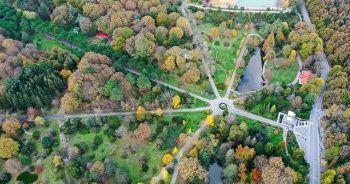 Arboretum nedir / Türkiye'deki arboretumlar