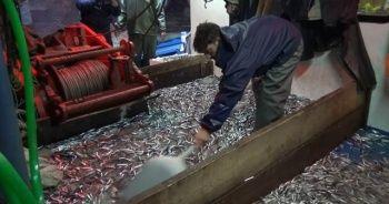 Karadenizli balıkçıların ağları hamsi ile doldu