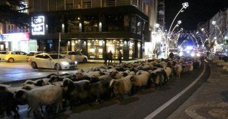 Trafik durdu, koyun sürüsü geçti