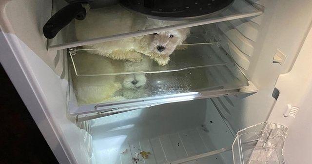Hayvan kaçakçılarının akıl almaz saklama yöntemi