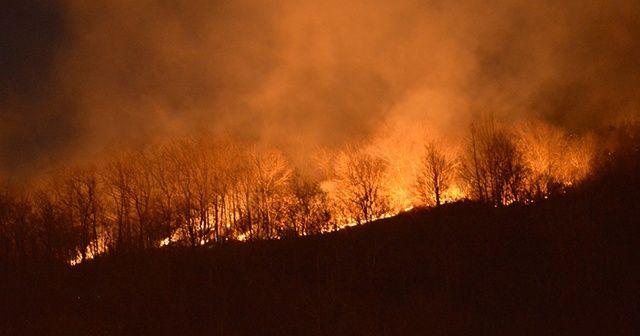 Ordu'da çıkan orman yangınına ekipler müdahale ediyor