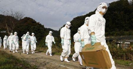 Dalga dalga yayılıyor: Japonya'da yeniden 'kuş gribi' alarmı