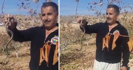 Elleriyle yakaladığı yılanı doğaya saldı