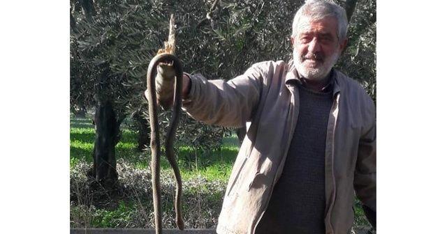 Kış ayında ortaya çıkan yılan korkuttu