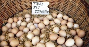 'Altın yumurtlayan tavuk' deyimi gerçek oldu