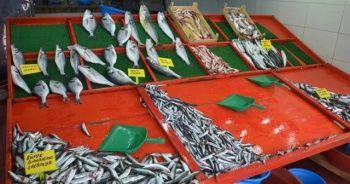 Aşırı avlanma hamsi fiyatlarını etkiliyor