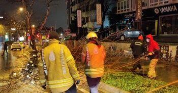 Bağdat Caddesi'nde devrilen ağaç kaldırıldı