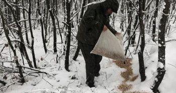 Karlı havada yaban hayvanları unutulmadı