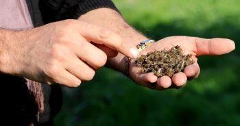 Kışlatmak için Adana'ya getirilen on binlerce arı telef oldu