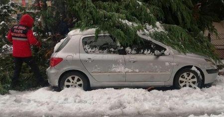 Devrilen ağaçlar 20 otomobile zarar verdi
