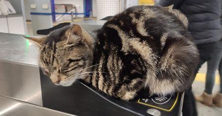 Soğuktan etkilenen kediler turnikelerinde ısındı