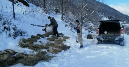 Teröristleri kovaladıkları dağlarda hayvanları unutmadılar