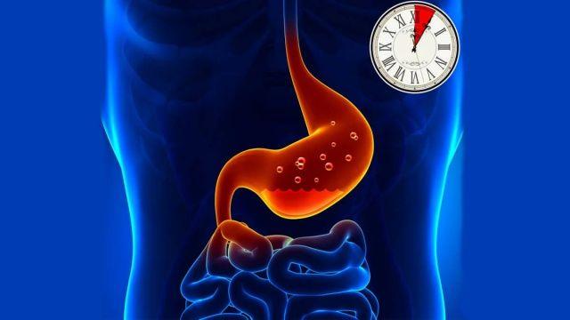 Besinlerin sindirim süreleri, Yiyecekler ne kadar sürede vücuttan atılır?