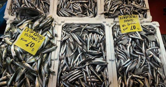 İstanbul'da hamsinin fiyatı 40 liraya yükseldi