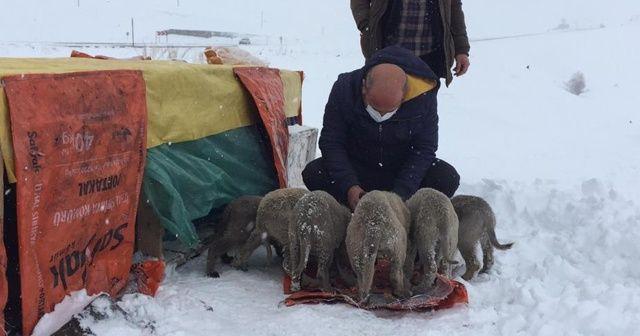Kış gününde içleri ısıtan, insanlık ölmemiş dedirten davranış