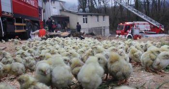 Civcivlerin bulunduğu çiftlikteki yangında duygusal görüntüler