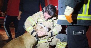 Dumandan zehirlenen köpek, kalp masajıyla hayata döndürüldü