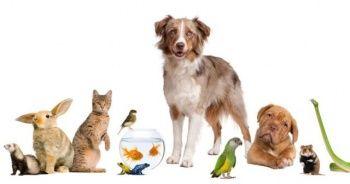 Evcil Hayvan (Kedi - Köpek) Bakımı İçin İhtiyaç Duyulan En Uygun Fiyatlı Ürünler