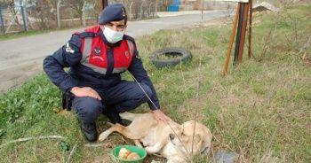 Jandarmadan uygulama sırasında yanına gelen köpeğe şefkat
