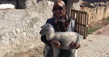 Şehit annesinin koyunları çalındı
