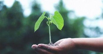 Siemens Energy ve BASF düşük karbon salınımlı üretim için güç birliği yapıyor