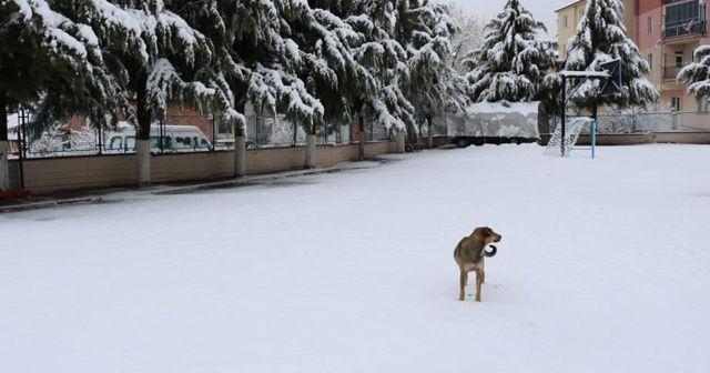 Mart ayında kar tatili