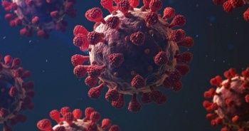 Fransa'da yeni mutant virüs tespit edildi