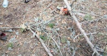 Kestiği ağaç üzerine devrilen adam hayatını kaybetti